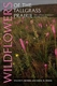 Picture of WILDFLOWERS OF THE TALLGRASS PRAIRIE: THE UPPER MIDWEST (2ND ED)