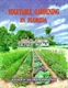 Picture of VEGETABLE GARDENING IN FLORIDA