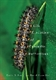 Picture of LIFE HISTORIES OF CASCADIA BUTTERFLIES