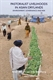 Picture of Pastoralist Livelihoods in Asian Drylands: Environment, Governance and Risk